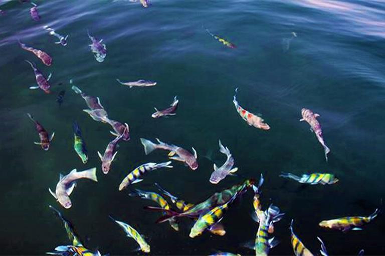 جاذبه های گردشگری جزیره هنگام| آکواریوم طبیعی جزیره هنگام | مهاجر سیر ایرانیان