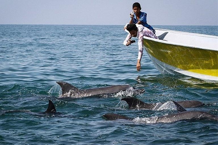 جاذبه های گردشگری جزیره هنگام| دسته دلفین های قشم | مهاجر سیر ایرانیان