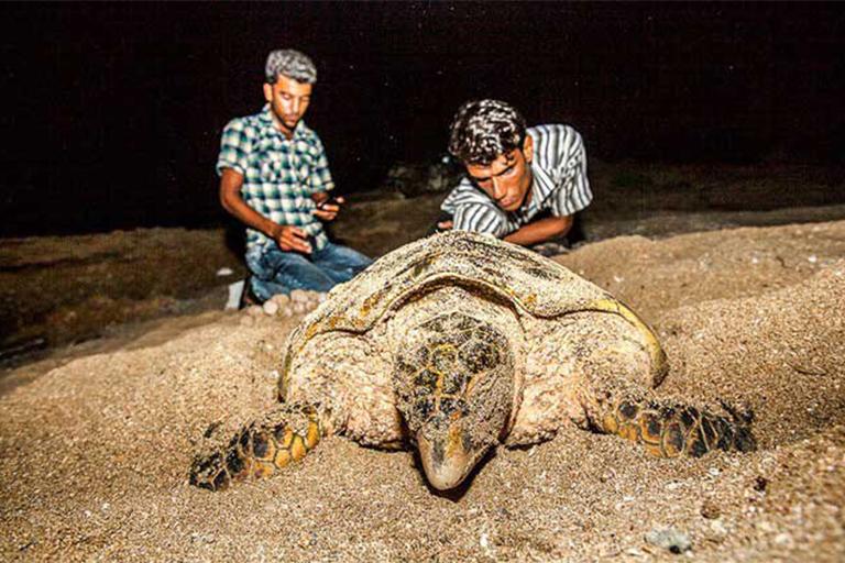 جاذبه های گردشگری جزیره قشم| ساحل تخم گذاری لاکپشت ها قشم | مهاجر سیر ایرانیان